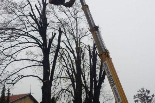 orezivanje-drvo-korpaF9B674B0-ECBF-5E63-4A31-083A70C7491E.jpg